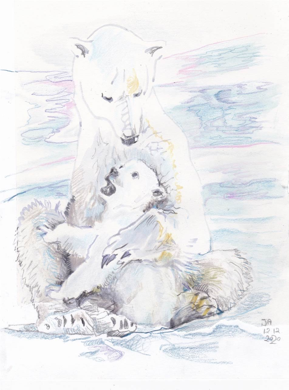 polarbear_11