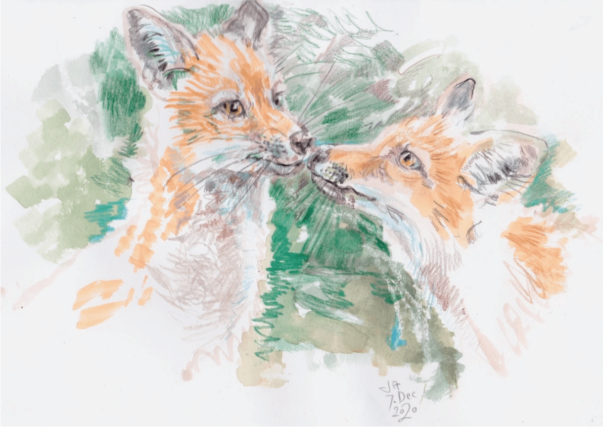 young-foxes
